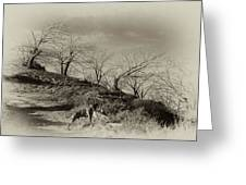 Campo Dog Greeting Card by Kenton Smith