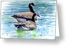 Canada Geese Greeting Card by John D Benson