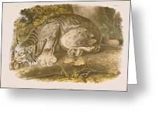 Canada Lynx Greeting Card by John James Audubon