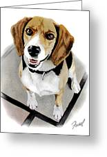 Canine Cutie Greeting Card by Ferrel Cordle