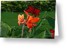 Canna 5 Greeting Card by Padamvir Singh