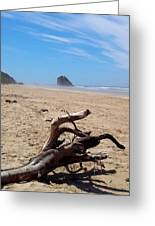 Cannon Beach Driftwood Greeting Card by Lori Seaman