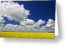 Canola field Greeting Card by Elena Elisseeva