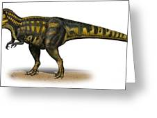 Carcharodontosaurus Iguidensis Greeting Card by Sergey Krasovskiy