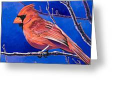 Cardinal Greeting Card by Bob Coonts