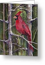 Cardinal Greeting Card by Sam Sidders