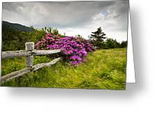 Carvers Gap Roan Mountain State Park Highlands Tn Nc Greeting Card by Dave Allen
