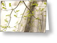 Cascade Falls Rushes Down  Cascade Greeting Card by Phil Schermeister