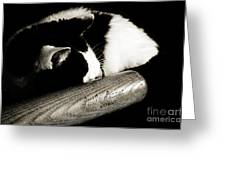 Cat and Bat Greeting Card by Andee Design