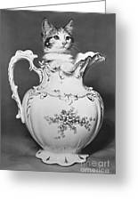 Cat In Pitcher Greeting Card by Larry Keahey