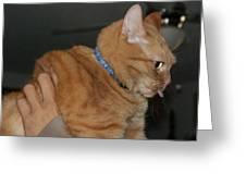 Cat Raspberry Greeting Card by Lynda Dawson-Youngclaus