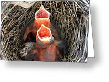 Cavernous Cardinals Greeting Card by Al Powell Photography USA