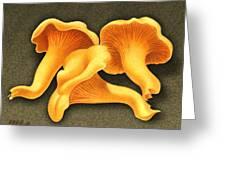 Chantarelle Mushrooms Greeting Card by Marshall Robinson