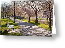 Charles River Cherry Trees Greeting Card by Susan Cole Kelly