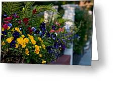 Charleston Flower Boxes Greeting Card by Melissa Wyatt