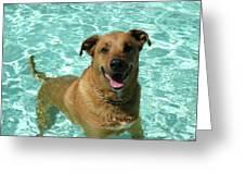 Charlie In Pool Greeting Card by Rebecca Wood