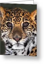 Cheetah Greeting Card by Craig Incardone