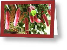 Chenille Caterpillar Plant Greeting Card by Corey Ford