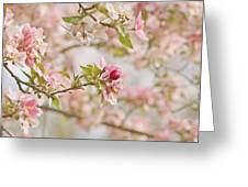 Cherry Blossom Delight Greeting Card by Kim Hojnacki