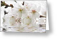 Cherry Blossom In Water Greeting Card by Elena Elisseeva