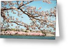 Cherry Blossoms Along The Tidal Basin Five Greeting Card by Susan Isakson