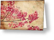 Cherry Blossoms Greeting Card by Rich Leighton