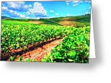 Chianti Vineyard In Tuscany Greeting Card by Dominic Piperata