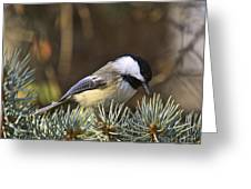 Chickadee-10 Greeting Card by Robert Pearson