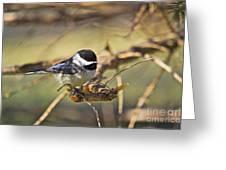 Chickadee-11 Greeting Card by Robert Pearson