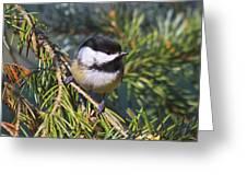 Chickadee-12 Greeting Card by Robert Pearson