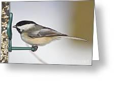 Chickadee-4 Greeting Card by Robert Pearson