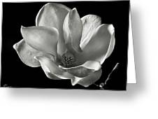 Chinese Magnolia Greeting Card by Endre Balogh