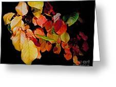 Chokecherry Leaves Greeting Card by Terril Heilman