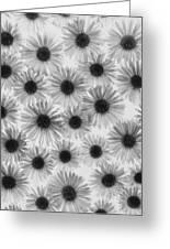 Chrysanthemum Flowers Greeting Card by Graeme Harris