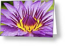 Close Up Of Violet Water Lily Greeting Card by Tosporn Preede