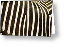 Close View Of A Zebras Stripes Greeting Card by Stacy Gold