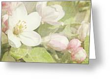 Closeup Of Apple Blossoms In Early Greeting Card by Sandra Cunningham