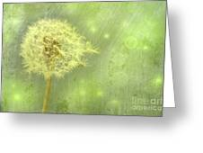 Closeup Of Dandelion With Seeds Greeting Card by Sandra Cunningham