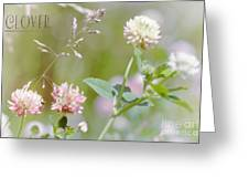 Clover Greeting Card by Elaine Manley