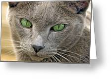 Clyde And His Green Eyes Greeting Card by James Steele