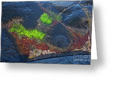 Coastal Floor At Low Tide Greeting Card by Heiko Koehrer-Wagner
