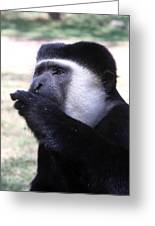 Colobus Monkey Greeting Card by Aidan Moran