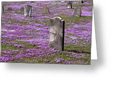 Colonial Tombstones Amidst Graveyard Phlox Greeting Card by John Stephens