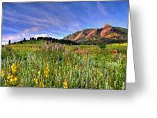 Colorado Wildflowers Greeting Card by Scott Mahon