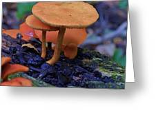 Colorful Mushrooms Greeting Card by Robert Ulmer