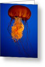 Colours Of The Jelly Fish Greeting Card by Naman Imagery