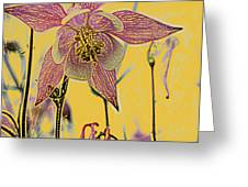 Columbine  Greeting Card by Michael Peychich