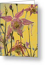 Columbine  Greeting Card by Michael Peychich
