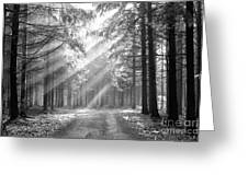 conifer forest in fog Greeting Card by Michal Boubin