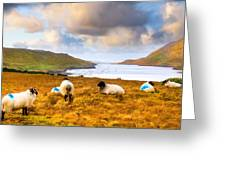 Connemara Sheep Grazing Over Killary Fjord Greeting Card by Mark E Tisdale